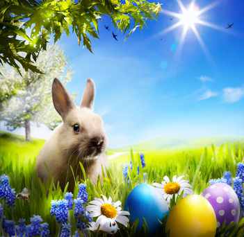 Frohe Ostern Osterhase Ostereier Versicherungsmakler Iserlohn Versicherung Versicherungen